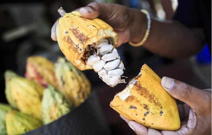 Pianeta Cacao